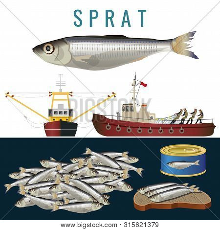 Fishery Set With Sprat Fish, Fishing Boats And Seafood. Vector Illustration In Realistic Style