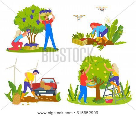 Harvesting People On Field Vector, Man And Woman Picking Grapes. Lady Working On Plantation With Car