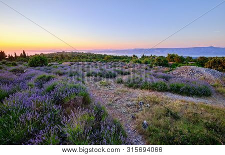 Lavender Field On Hvar Island At Sunset, Croatia