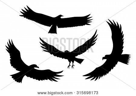 Flying Eagle, Falcon And Hawk Black Silhouette Bird Set. Vector Bird Predator In Flying Poses For Sy