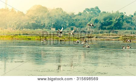Flock Of Migratory Birds Flying Over Lake. The Freshwater And Coastal Bird Species Spotted In Wester