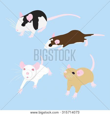 Set Pet Rat. Cute Rat. Cute Pet. Decorative Rat. Domestic Rat.