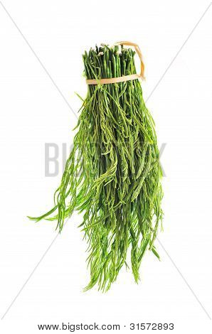 Young Acacia Leaf For Vegetable Food