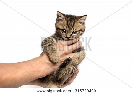 Young Woman Holding A Little Kitten In Her Arms