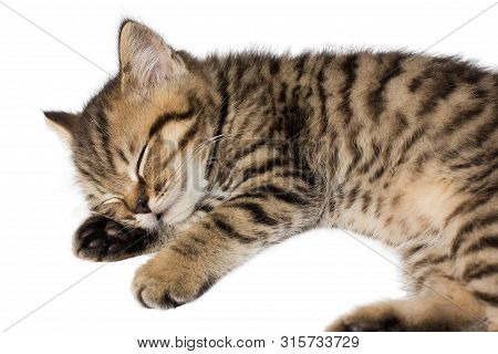 Cat Is Sleeping On A White Background. Horizontal Photo.