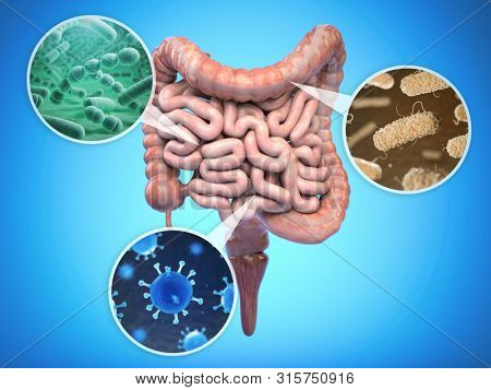 Bacteries of human intestine, Intestinal flora gut health concept. 3d illustration