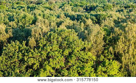 Natural Background - Panoramic View Of Forest Illuminated By Sunset Sun In Summer Evening