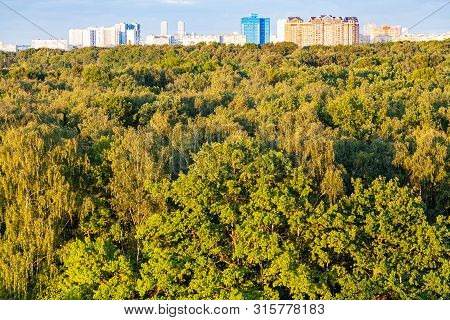 Natural Background - Forest Illuminated By Sunset Sun And City On Horizon In Summer Evening