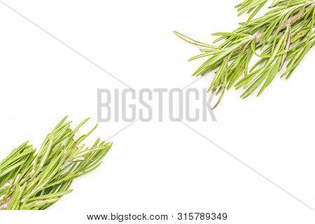 Group Of Two Whole Leathery Fresh Evergreen Sprig Of Rosemary Flatlay Isolated On White Background