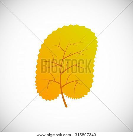 Yellow Leaf Beech. Autumn Leaf Of A Tree On A White Background. Vector Illustration