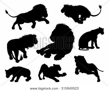 Lion Silhouettes. Male And Female Lions In Silhouette In Various Poses