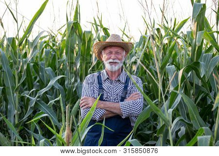 Satisfied Old Farmer With White Beard Standing With Crossed Arms In Corn Field In Summer