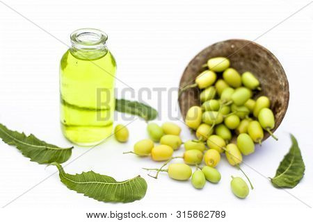 Fresh Green Neem Fruit Of Indian Lilac Fruit In A Clay Bowl Isolated On White Along With Its Oil In