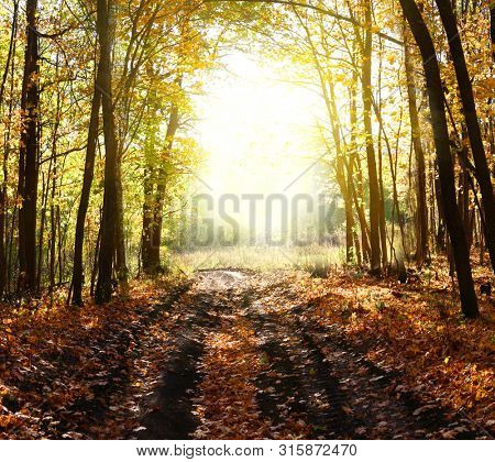 Fantasy background . Magic forest.Beautiful autumn landscape.
