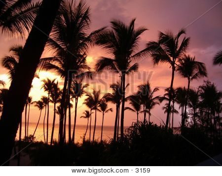 Sunset & Palms 1