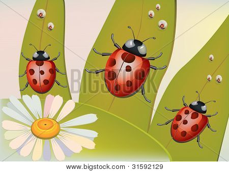 Spring- beetles attracted to the sun  . poster