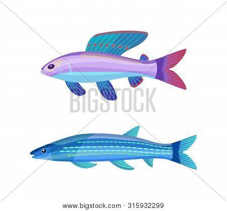 Rare Exotic Aquarium Unusual Color Fish. Violet-blue Sea Creature With Red Dotted Fin And Long Strip