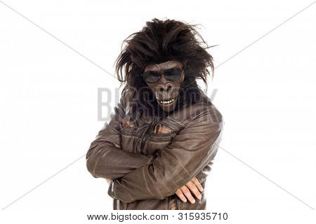 Man with gorilla head isolated on a white background