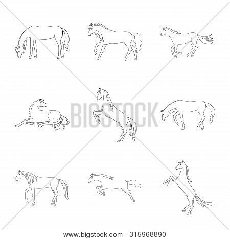Vector Design Of Stallion And Galloping Logo. Collection Of Stallion And Riding Stock Symbol For Web
