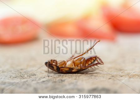 Dead Cockroach, The Problem In The House Because Of Cockroaches Living In The Kitchen. Cockroach Eat