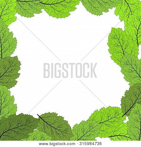 Frame With Green Leaves On A White Background For Any Designs