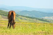 lonely horse grazing at the green grass meadow poster
