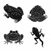 Vector illustration of fauna and reptile logo. Set of fauna and anuran vector icon for stock. poster