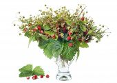 Bouquet from branches of wild wood strawberry in a glass jug poster