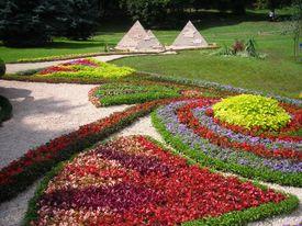 Egypt  Flower Pattern
