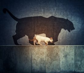 A Small Cat And A Big Tiger Shadow