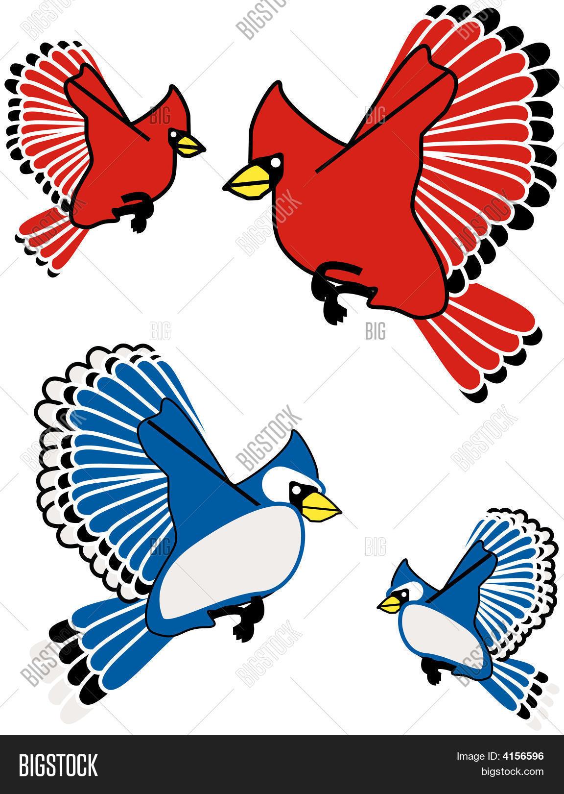 Blue Jay Cardinal Vector Photo Free Trial Bigstock
