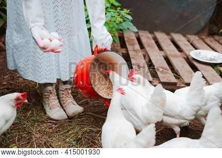 Unrecognizable Woman In White Rubber Gloves, Collecting Eggs And Feeding Grain To Free-range Chicken