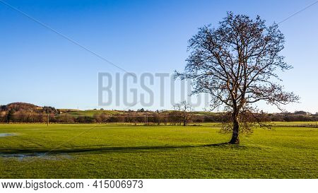 A Lone Broadleaf Tree In An Empty Green Field On A Sunny Winters Day, New Galloway, Scotland