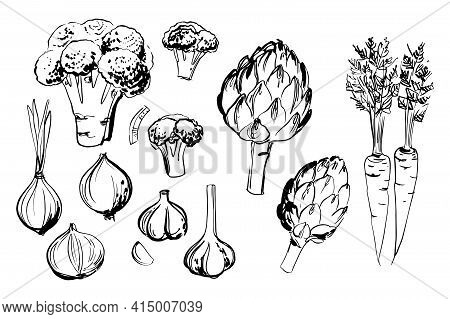 Sketch Of Food Vegetables By Line And Watercolor. Broccoli, Artichoke, Carrot, Onion, Garlic