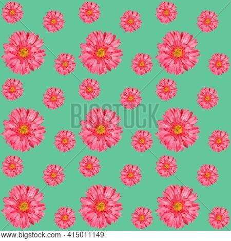Seamless Pattern With Pink Gerbera Flowers Of Different Sizes On Turquoise. Festive Floral Square Ba