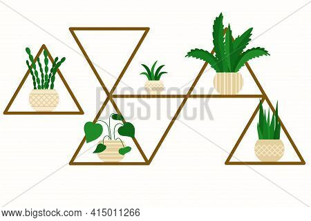 Unusual Shelf With Indoor Flowers In Pots. Rack With Plants. Various Indoor Green Plants On The Shel