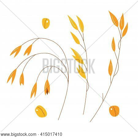 Hand Drawn Set Of Oats, Oatmeal, Oat Grain. Stock Vector Isolated On White Background. Healthy Food