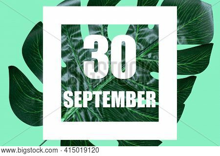 September 30th. Day 30 Of Month, Date Text In White Frame Against Tropical Monstera Leaf On Green Ba