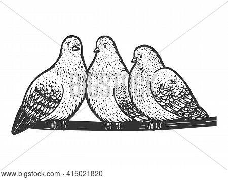 Pigeons Birds Seat On Wire Sketch Engraving Vector Illustration. T-shirt Apparel Print Design. Scrat