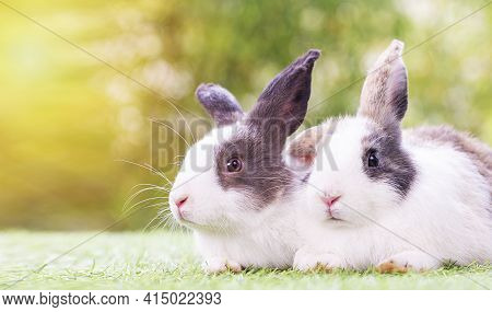 Easter Animal Concept. Two Adorable Fluffy Rabbits Bunny Sitting Togetherness On The Green Grass Ove