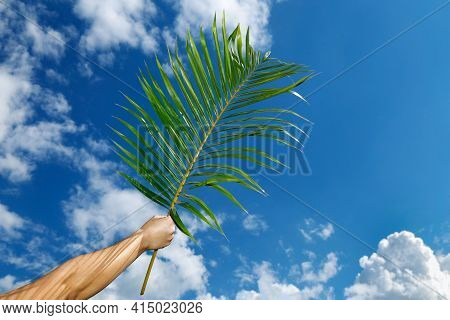 Hand Holding Branch With Blue Sky Background At Palm Sunday Celebration. Holy Week. Traditional Cath