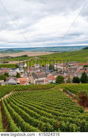 Landscape With Green Grand Cru Vineyards Near Cramant, Region Champagne, France In Rainy Day. Cultiv
