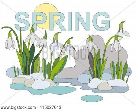 White Snowdrops Grow From The Snow, In The Background Of The Picture The Inscription Spring And The