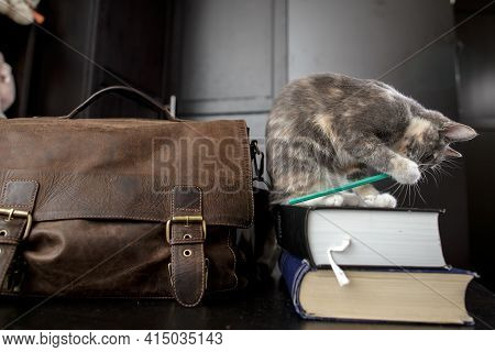 Funny Cat Enthusiastically Gnaws A Pencil While Sitting On The Books, Next To It There Is An Old Bri