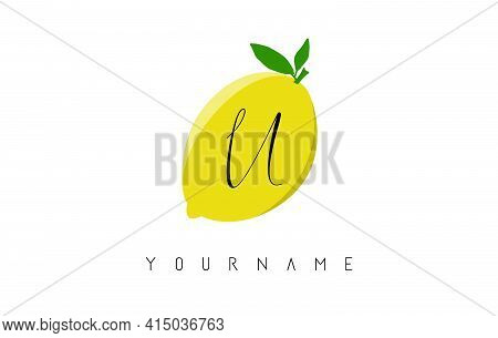 Handwritten U Letter Logo Design With Lemon Background. Creative Vector Illustration With Lemon And