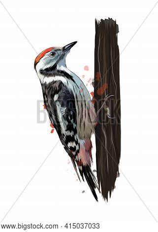 Woodpecker From A Splash Of Watercolor, Colored Drawing, Realistic. Vector Illustration Of Paints