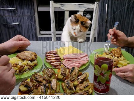 Family Dinner. The Cat Steals Food From The Table. A Man And A Woman Are Having Lunch