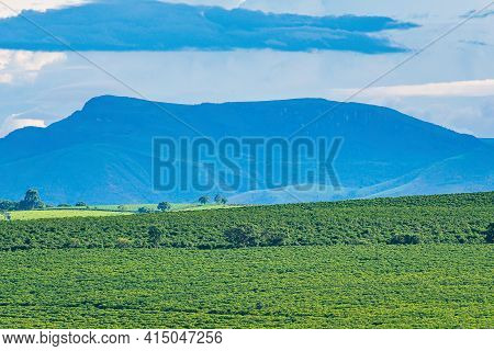 Landscape Of Brazilian Farming Of Minas Gerais State. Beautiful Landscape With Plantations And An Am