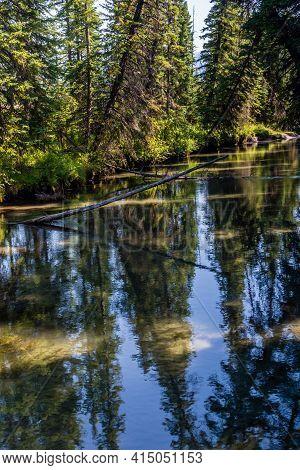 40 Mile Creek Meanders Beside Fenland Trail. Banff National Park, Alberta, Canada