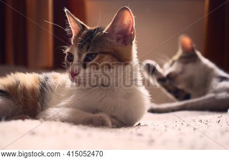 Two Tabby, Mixed Breed Cats Relaxing On A Bed.